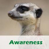 Awareness