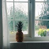 Home Window Security